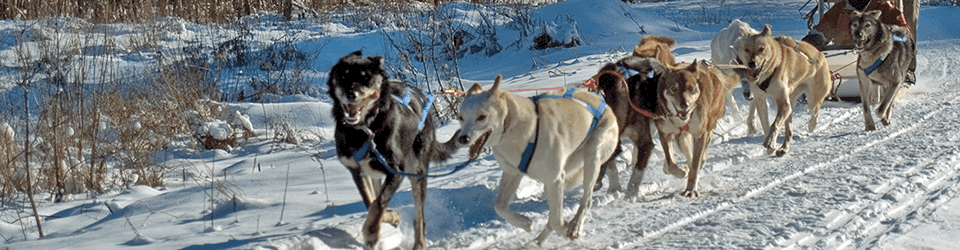 dogsledding in northern new hampshire